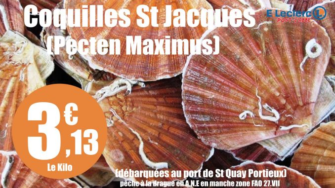 coquille-st-jacques-001
