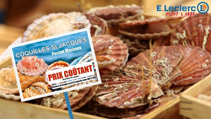 coquille-st-jacq